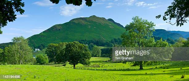 Ash tree in pastureland by Catbells mountain in Cumbrian mountain range at Stair near Derwentwater in Lake District National Park UK