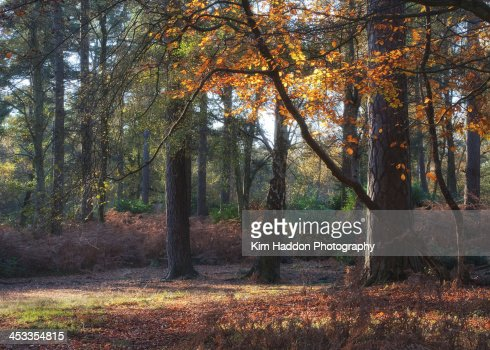 Ashdown Forest in Autumn