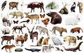 Set of various asian isolated wild animals including birds, mammals, reptiles and insects