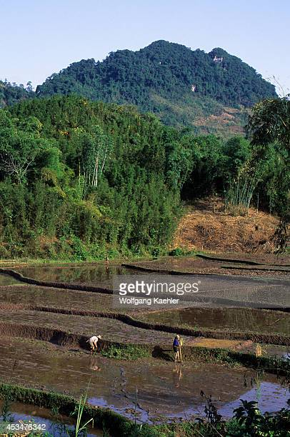 Asia No Vietnam Near Hoa Binh Giang Mo Village Muong Hilltribe People Working In Rice Fields