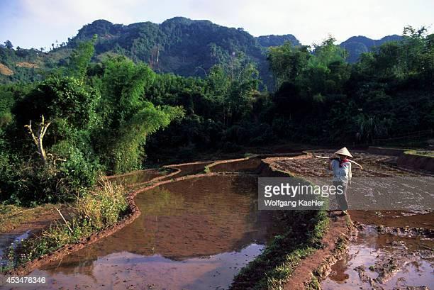 Asia No Vietnam Near Hoa Binh Giang Mo Village Muong Hilltribe Woman Walking Along Rice Field