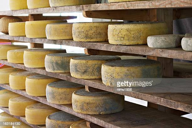 Asiago cheese aging in the factory