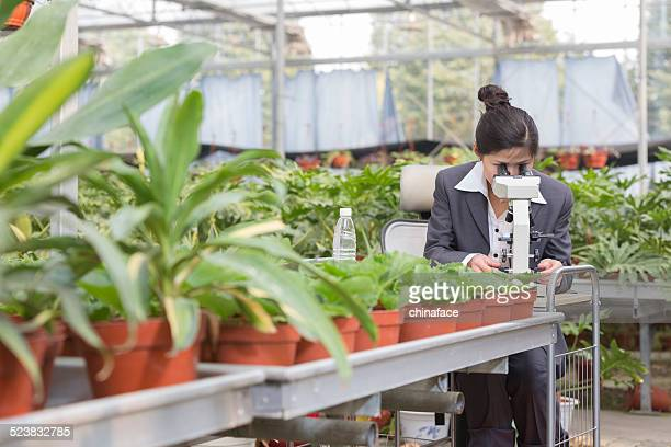asian businesswoman in greenhouse