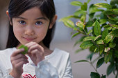 Asian girl picks a green leaf from a plant