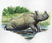 Asian Onehorned Rhinoceros getting out of water illustration