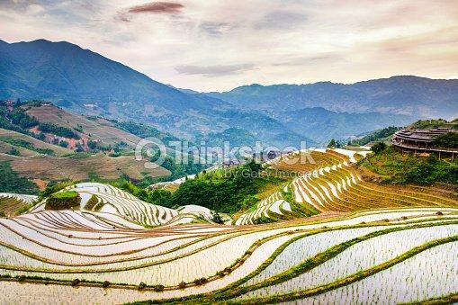 Décor De Terrasse De Riz Asiatique Au Coucher Du Soleil Photo ...