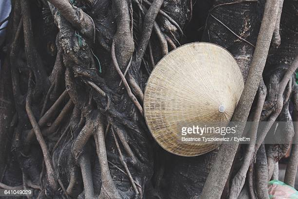 Asian Style Conical Hat Amidst Tree Roots