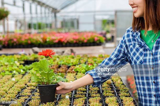 Asian woman browses plants in local nursery