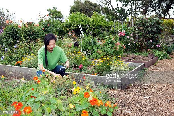 Asian woman gardening