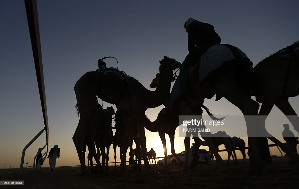 Asian workers gather camels at the Sweihan racecourse before a training race on February 9, 2016, during the Sheikh Sultan Bin Zayed al-Nahyan heritage festival in Al-Ain. / AFP / KARIM SAHIB