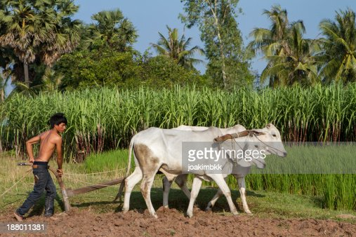 Asian young farmer working the field
