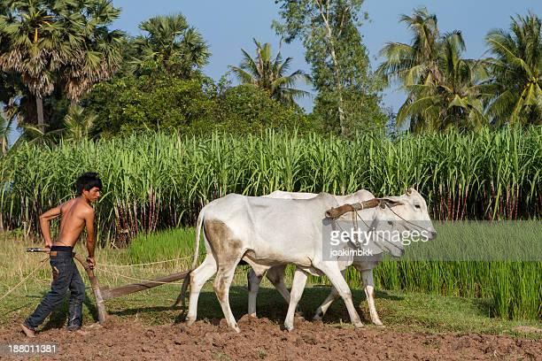 Asiatische junger Landwirt Arbeiten im Feld