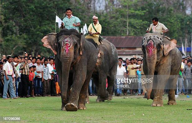 Asiatic elephants with Indian mahouts take part in a traditional elephant race during the Suwori festival in Boko some 70 kms from Guwahati on April...