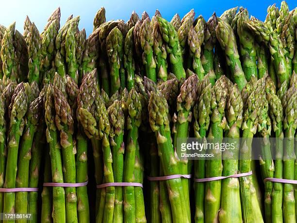 Asparagus Bundels