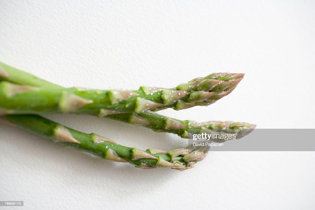 Asparagus : Stock Photo