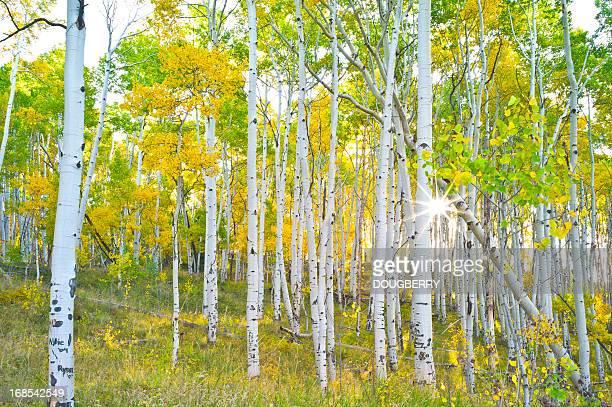 Aspen Grove Colorado