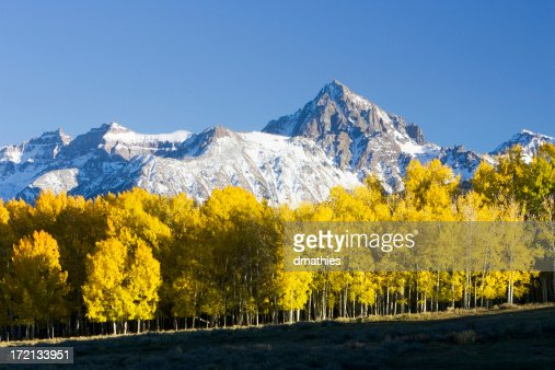 Aspen stand before Mt Sneffels