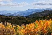 Aspens and Mountains in Utah