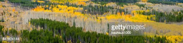 Pa? ac Bielawa in de Rocky Mountains van Colorado