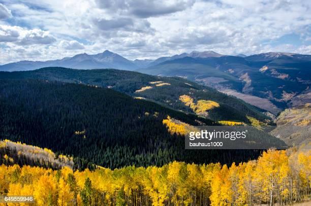 Aspens in the Colorado Rocky Mountains