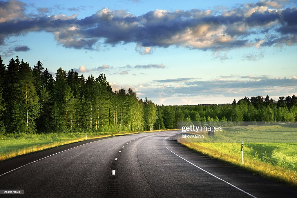 Asphalt road in forest : Stock Photo