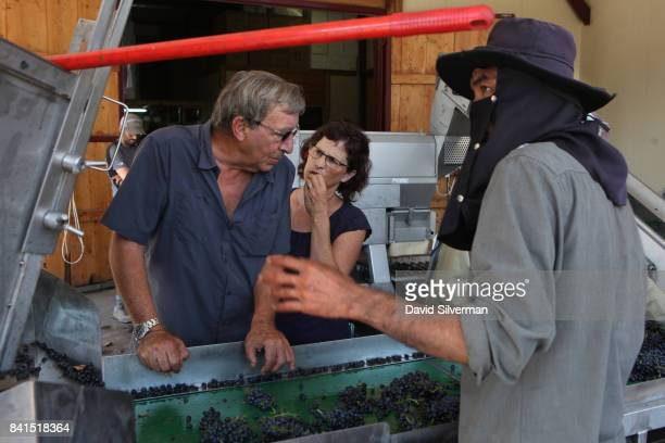 Assaf and Hadassah Kedem sort Merlot grapes for quality shortly after being harvested at their Assaf Winery on August 19 2017 at Kidmat Zvi in the...