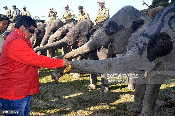 Assam Forest minister Rockybul hussain feeds an Elephant in the kaziranga national park in Kaziranga about 250km east of Guwahati Assam India on 01...
