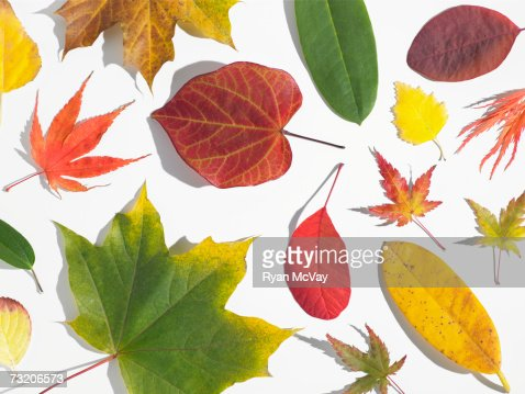 Assorted autumn leaves : Stock Photo