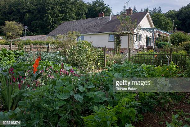Assorted homegrown vegetable plot in a Somerset back garden The homegrown organic crops have been sown and nurtured on this privatelyowned land in a...