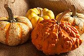 Assorted mini-pumpkins, studio still life