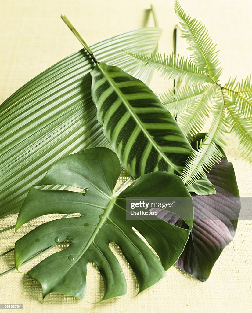 Assorted tropical leaves