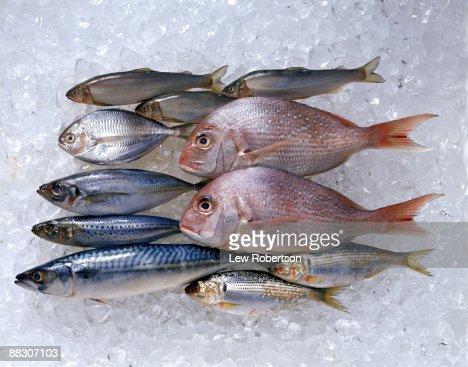 Assortment of fish on ice