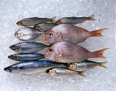 Assortment of fish on ice