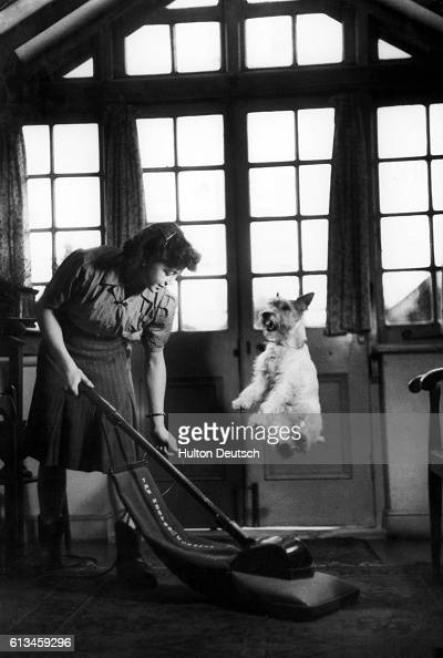 Asta a wire haired terrier and a performer in the Stevenson Dog Act practices a stunt by jumping over a vacuum cleaner as his trainer Dianna...