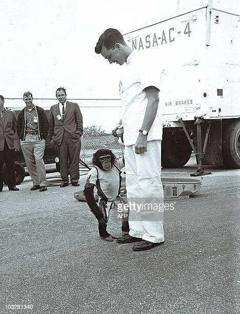 US astronauts Alan Shepard is photographed with chimpanzee Ham who preceded him in space with a 16' 39'' seconds suborbital flight performed aboard...