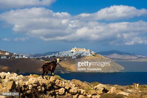 Astypalea goat