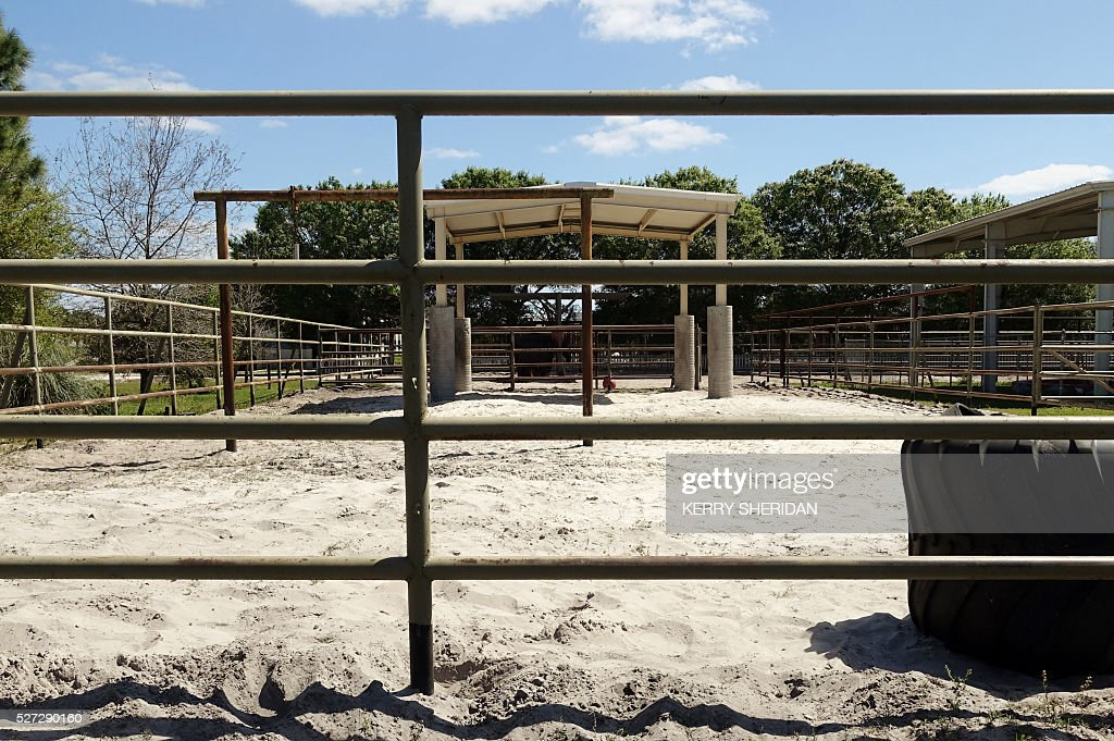 At an elephant refuge in Polk City, Florida, an empty pen with a monster truck tire as a toy awaits the arrival of a retiring elephant. The last 11 elephants performing with the Ringling Bros. circus had their last show May 1, 2016. / AFP / Kerry SHERIDAN / TO GO WITH AFP STORY BY KERRY SHERIDAN-'Circus elephants' retirement home promises pampered life '