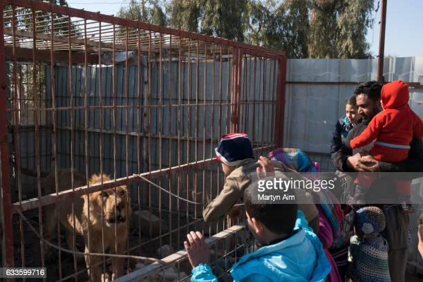 MOSUL IRAQ FEBRUARY 2 At Muntazr al Noor Zoo in east Mosul Iraq a father and his children visit the last lion left alive in the zoo on February 2...