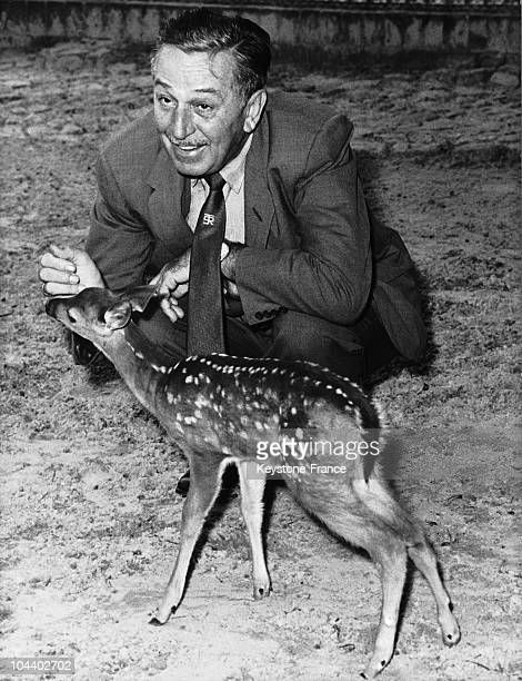 At the Berlin Zoo on July 2 Walt DISNEY met the fawn that served him as a model for the character BAMBI