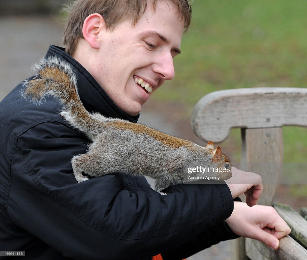 At the seen a visitor plays with a squirrel at St. James Park in London on February 5, 2014. Visitors feed birds, ducks and other animals regularly at St. James's Park in London.