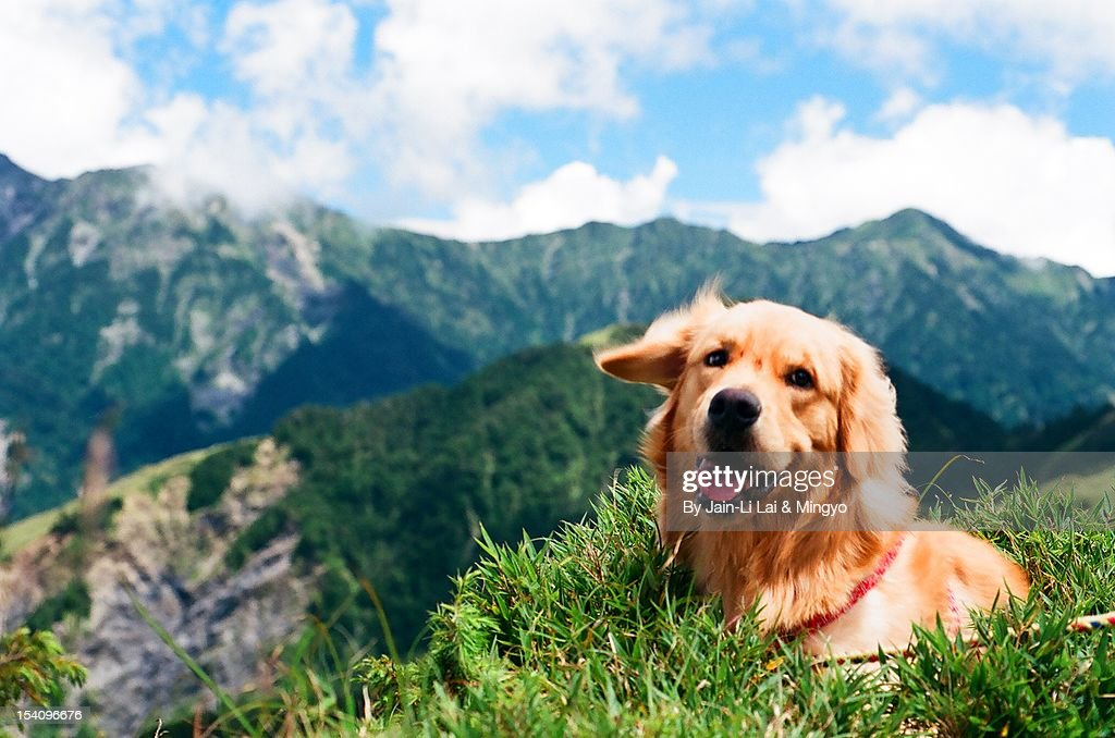 At the top : Stock Photo