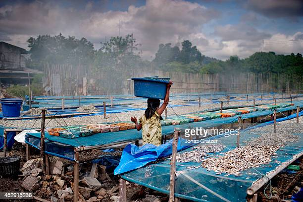 At this fishery in Phuket Thailand many Burmese labourers work in slave like conditions many of the workers are illegal immigrants including younger...