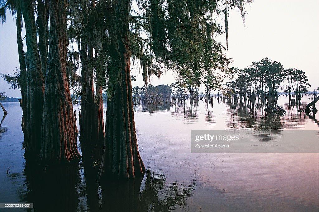 Atchafalaya River, Atchafalaya Basin, Louisiana, USA : Stock Photo