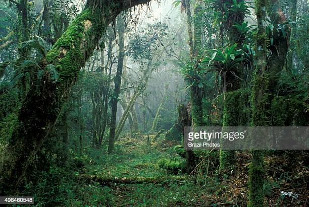 Atlantic forest Brazil The Atlantic Forest is a terrestrial biome and region which extends along the Atlantic coast of Brazil from Rio Grande do...