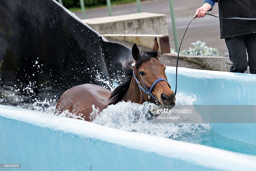 Atlantic Jewel walks in the swimming pool at Flemington Racecourse on September 10, 2013 in Melbourne, Australia.