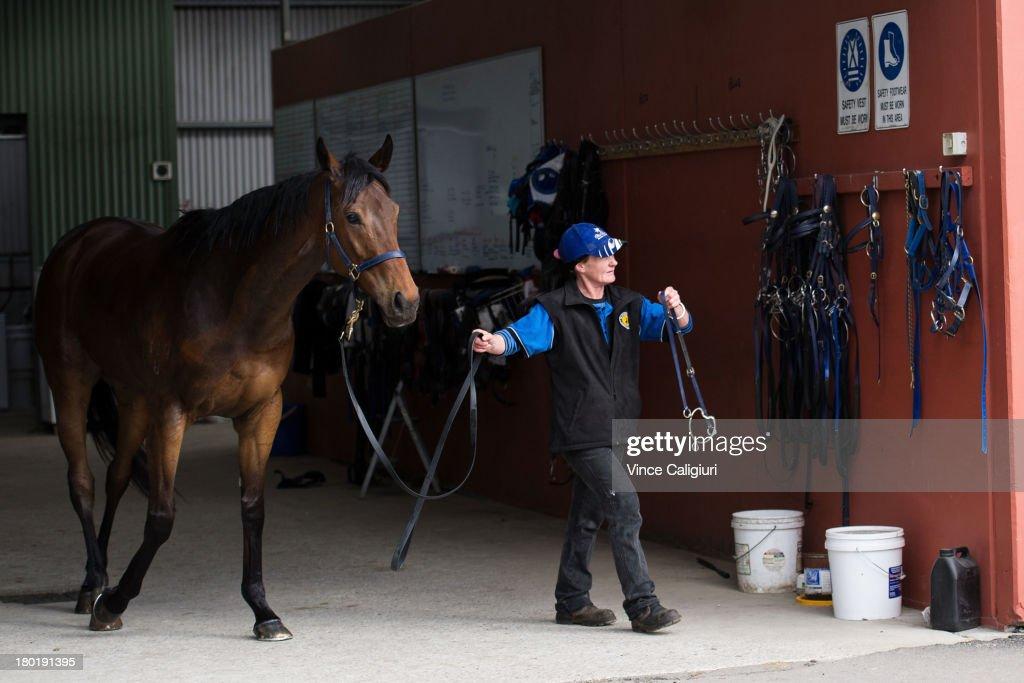 Atlantic Jewel walks with strapper Leanne Pollard at Flemington Racecourse on September 10, 2013 in Melbourne, Australia.
