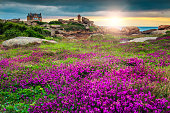Magical sunset with colorful flowers in Perros-Guirec on Pink Granite Coast, Brittany, France, Europe