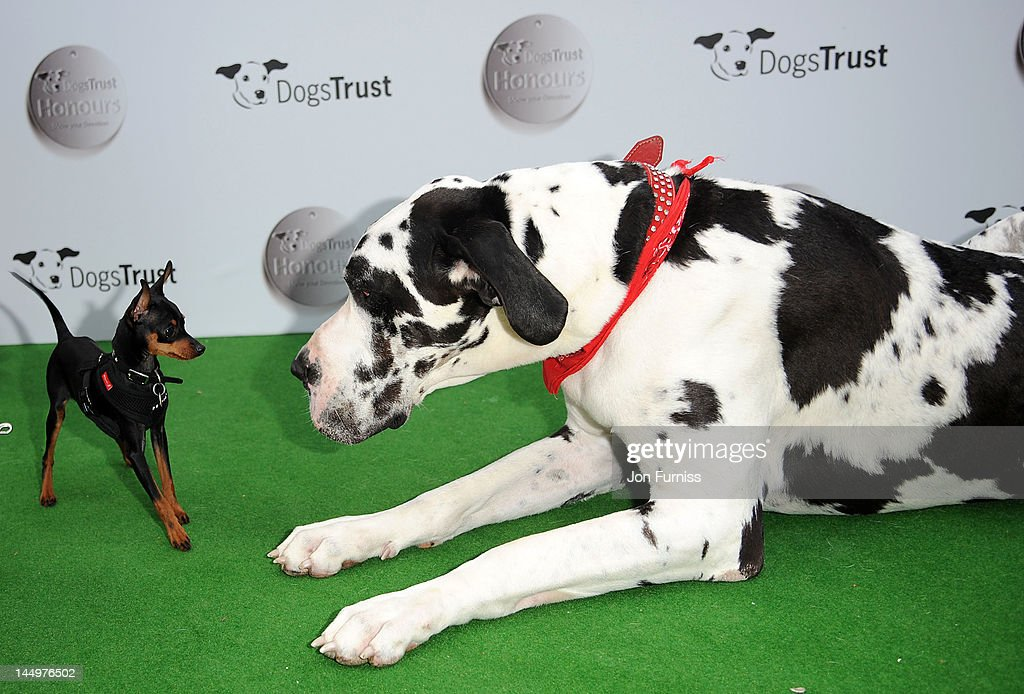 Atmosphere at the 21st Dog Trust Awards at Honourable Artillery Company on May 21, 2012 in London, England.