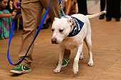 Southampton Animal Shelter Foundation's Unconditional...