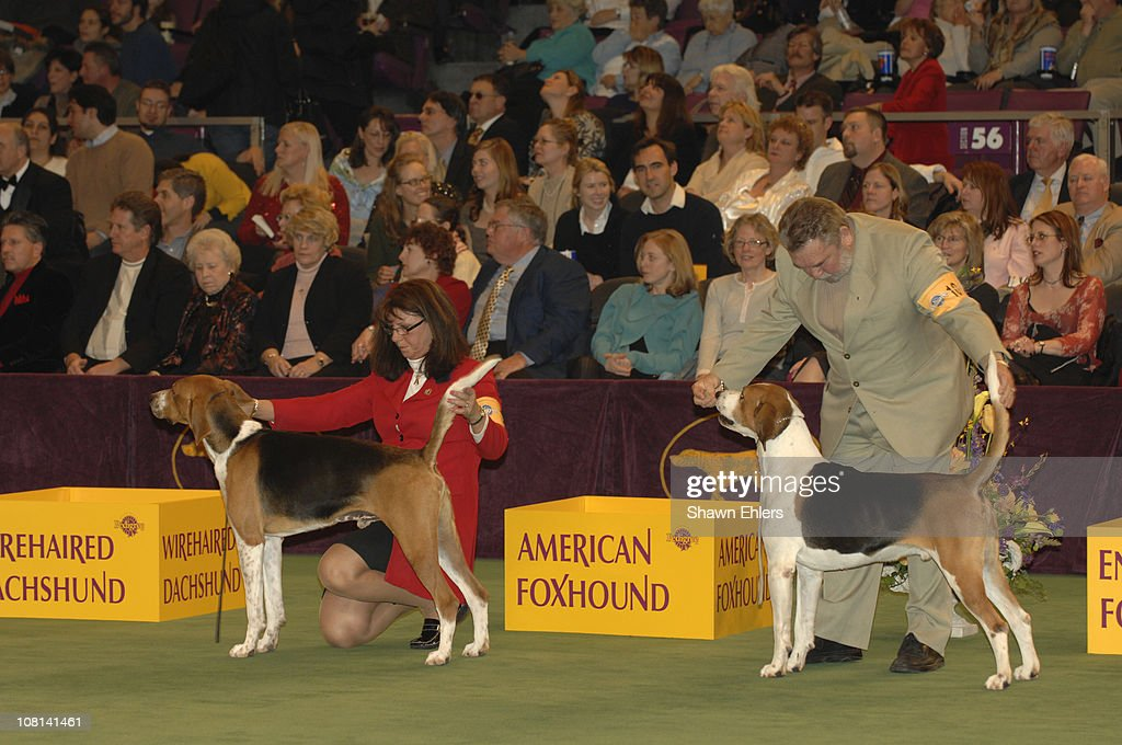The Westminster Kennel Club 131st Annual Dog Show Day 2 Getty Images